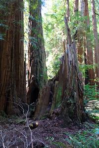 MuirWoods_CA_03 27 2010_050
