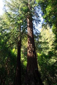 MuirWoods_CA_03 27 2010_005