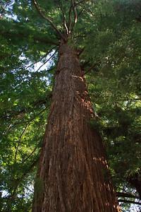 MuirWoods_CA_03 27 2010_003