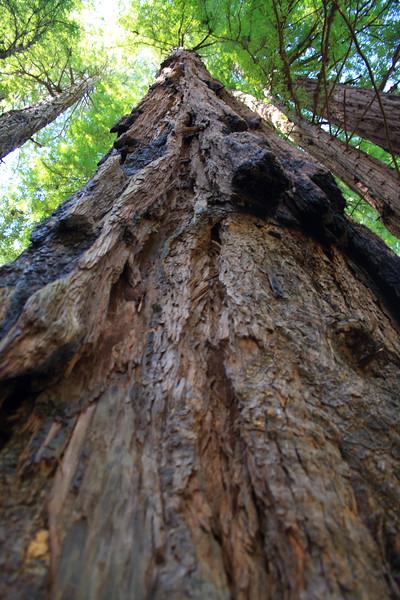 MuirWoods_CA_03 27 2010_067