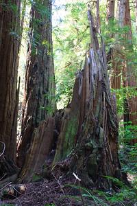 MuirWoods_CA_03 27 2010_052
