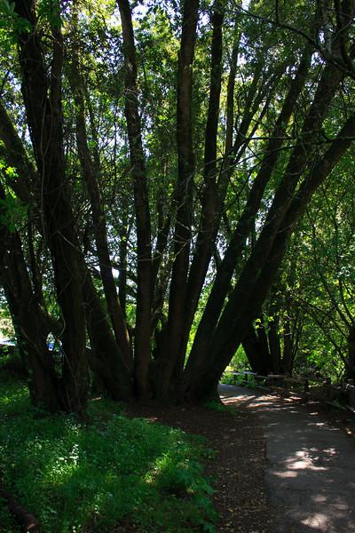 MuirWoods_CA_03 27 2010_074