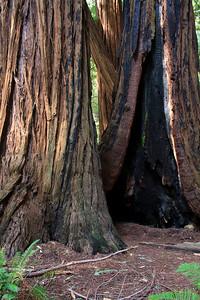 MuirWoods_CA_03 27 2010_017