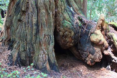 MuirWoods_CA_03 27 2010_024