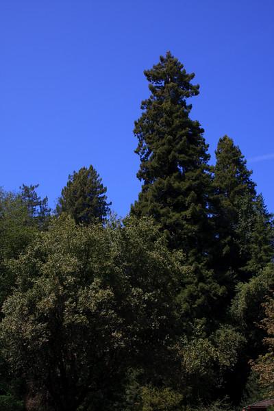 MuirWoods_CA_03 27 2010_073