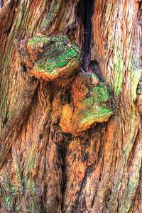 MuirWoods_CA_03 27 2010_036_7_8