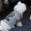 Such a cute police doggy