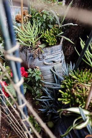 Pants & Plants | San Francisco, CA | July 2016