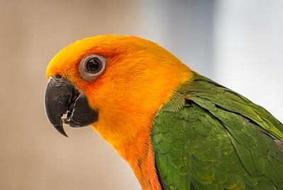 Goska's Parrot
