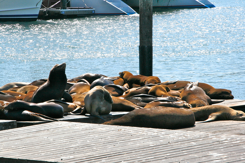 The sea lions in San Francisco Bay are famous.