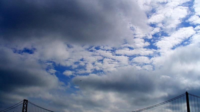 Bay Bridge, bird, and clouds