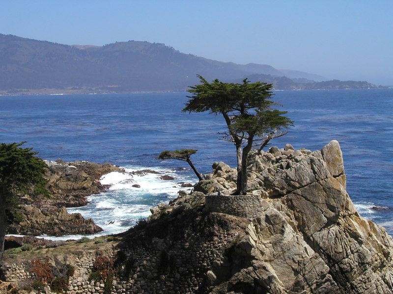 Lone Cypress on the 17 mile drive in Pebble Beach