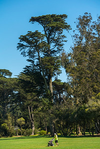 San Francisco, CA, USA, Golden Gate Park
