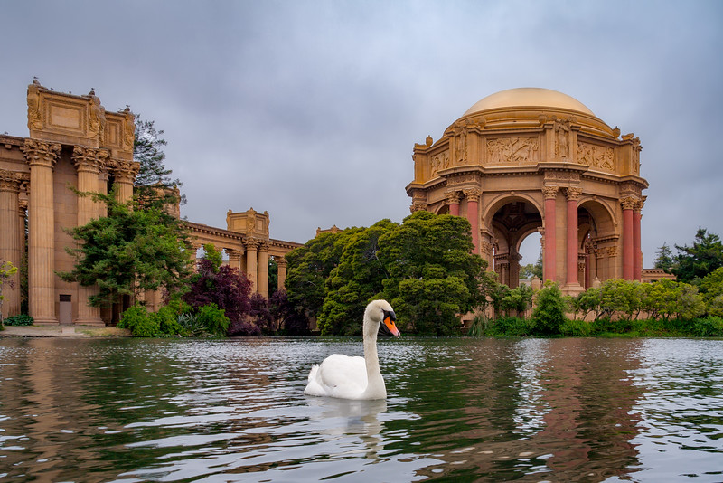 Swan at the Palace of Fine Art