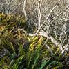 Mt_Bruno_Bog_Trail_035