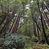Highway 9 near Big Basin Redwoods State Park