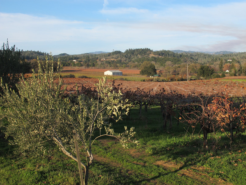 Sanoma winelands.
