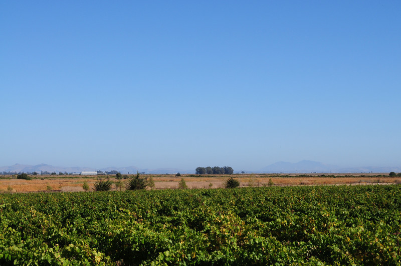 Here's one of the wineries