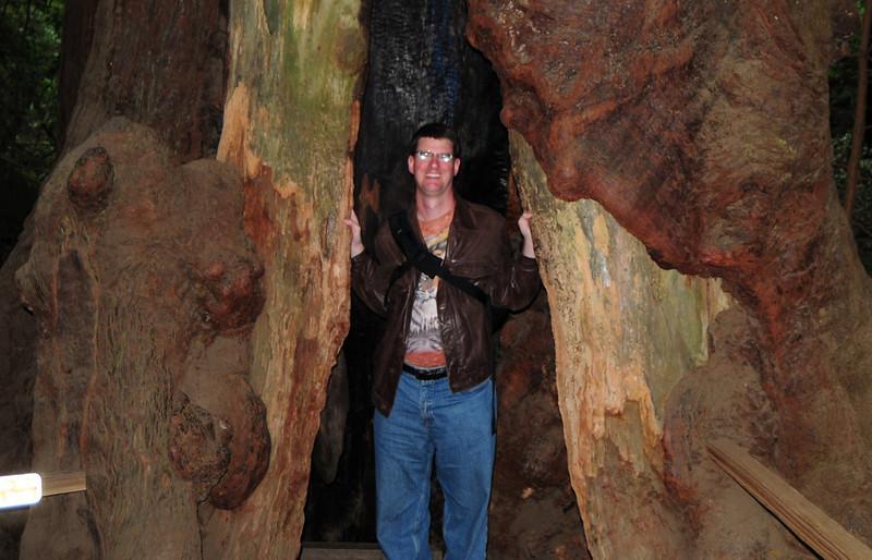 Look!  I'm inside a tree trunk.