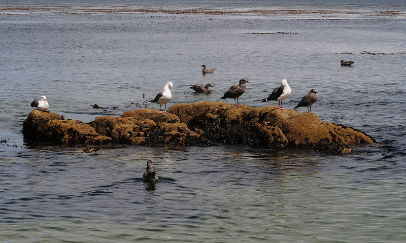 Seagulls perched on a rock.