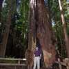Your's truly and a Redwood