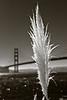 298_San Francisco_L0066