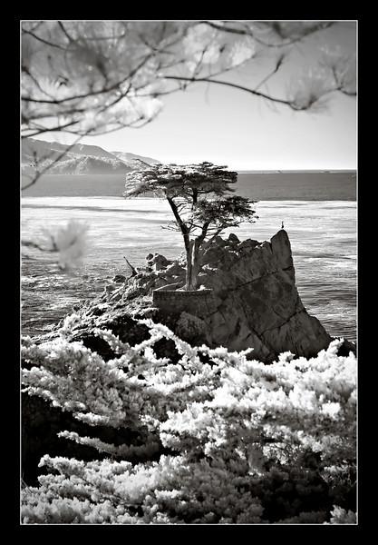 448_Monterey_L0066-Edit-T