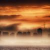 The City of Fog