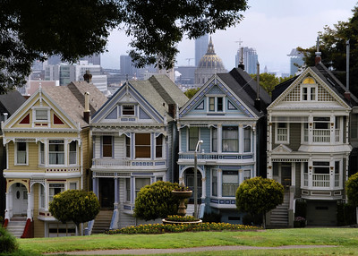 Painted Ladies at Mid Morning