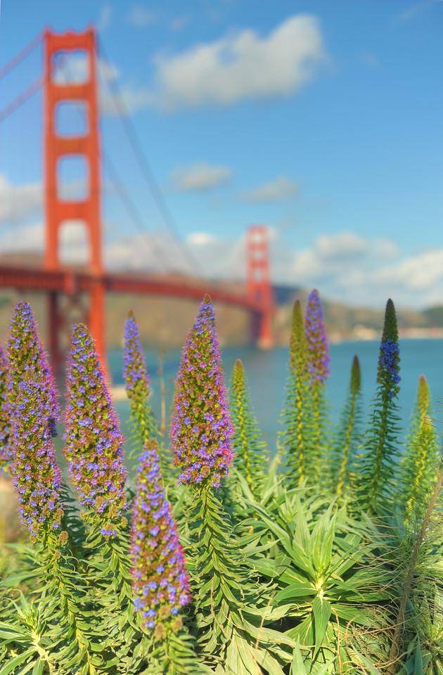 Purple flowers at Golden Gate