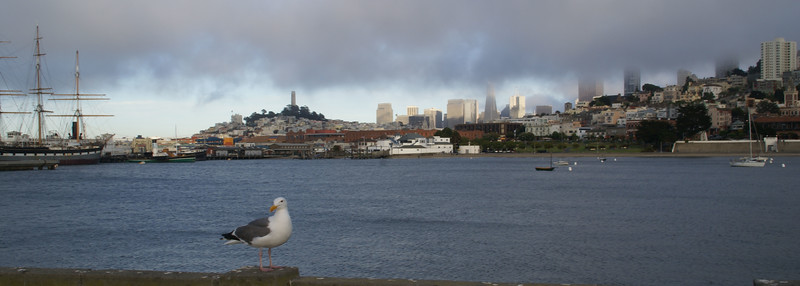 San Francisco Panoramic with Seagull