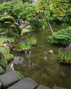 Carp Pond at Japanese Tea Garden
