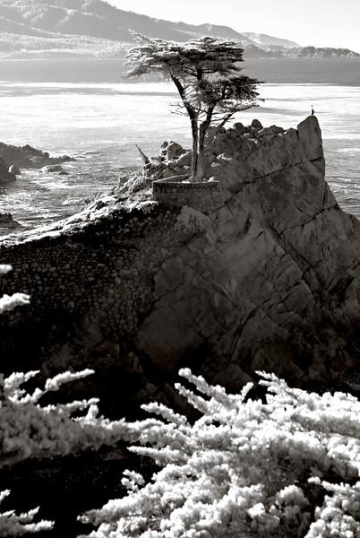 438_Monterey_L0066-Edit