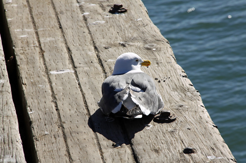 Seagull taking in some sun