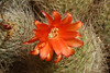 San Jose cactus garden