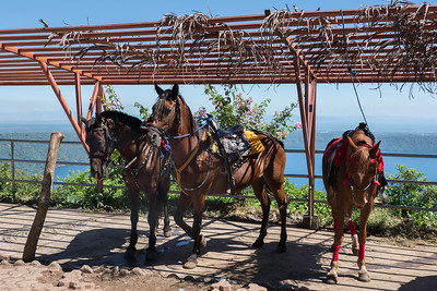 Horses for riding the crater's trail system