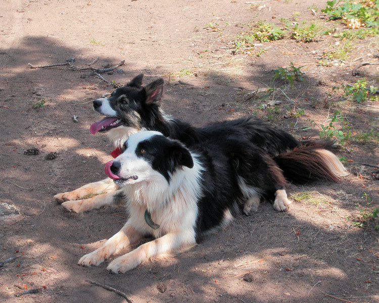 Day 6 Resting the Dogs