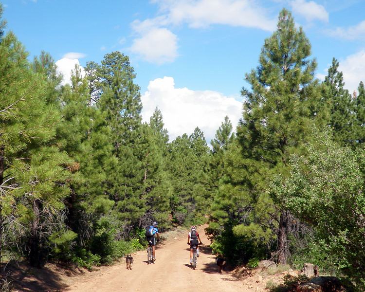 Day 6 Out of the Desert into the Forest
