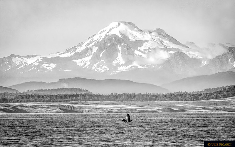 Paying homage to Mt. Baker