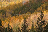 Fall Colors, Autumn, Aspen Trees, San Juan Mountains, San Juan National Forest, Durango, Colorado, USA, North America