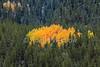 Fall Colors, Autumn, Aspen Trees, San Juan Mountains, San Juan National Forest, Durango, Colorado, USA, North America