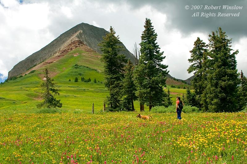 Model Released, Kim Greer, Wildflowers in Alpine Meadow below Engineer Peak (12,968 feet), San Juan National Forest, Durango, Colorado, early August