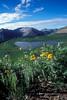 Wildflowers, Taylor Lake, La Plata Mountains, Near Durango, Southwestern Colorado