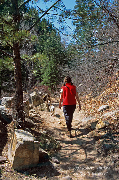 Model Released, Female Hiker with two Dogs, Colorado Trail, San Juan National Forest, Colorado, USA, North America