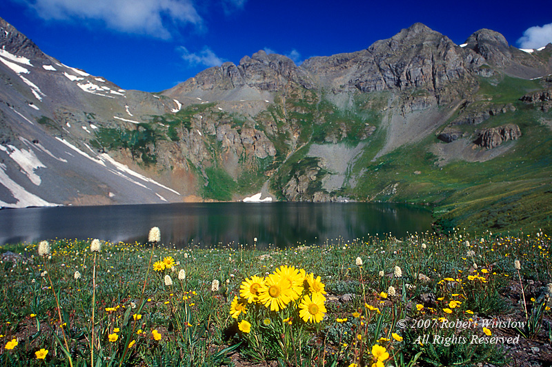 Alpine Sunflowers, Clear Lake, San Juan Mountains, San Juan National Forest, Colorado