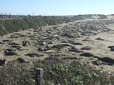 San Simeon elephant seals & Hearst castle
