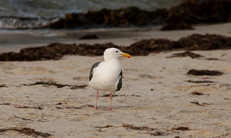 San diago La Jolla Cove Beach