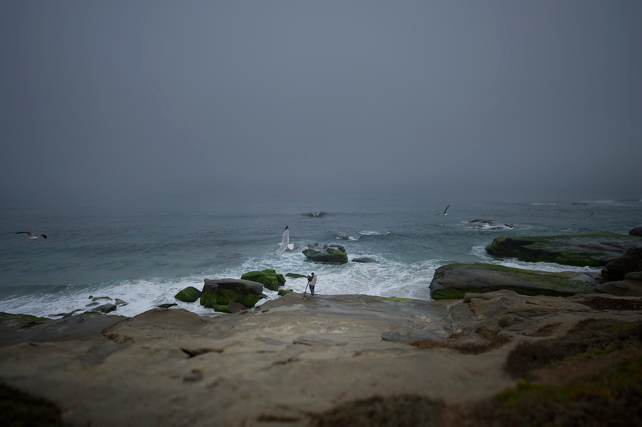Birds and Photographer stormy day at La Jolla Cove