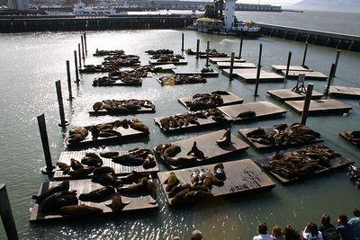 IMG_3129 Pier 39 Sea Lions