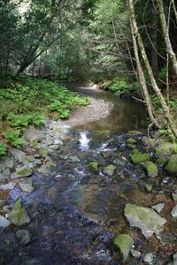 IMG_3582 Muir Woods Creek